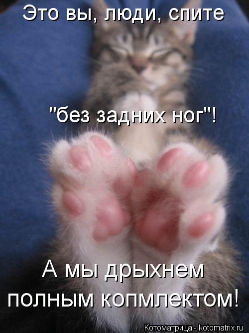 """Котоматрица: Это вы, люди, спите """"без задних ног""""! А мы дрыхнем полным копмлектом!"""