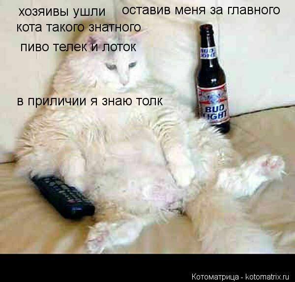 Котоматрица: хозяивы ушли  оставив меня за главного кота такого знатного в приличии я знаю толк пиво телек и лоток