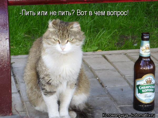Котоматрица: -Пить или не пить? Вот в чем вопрос!