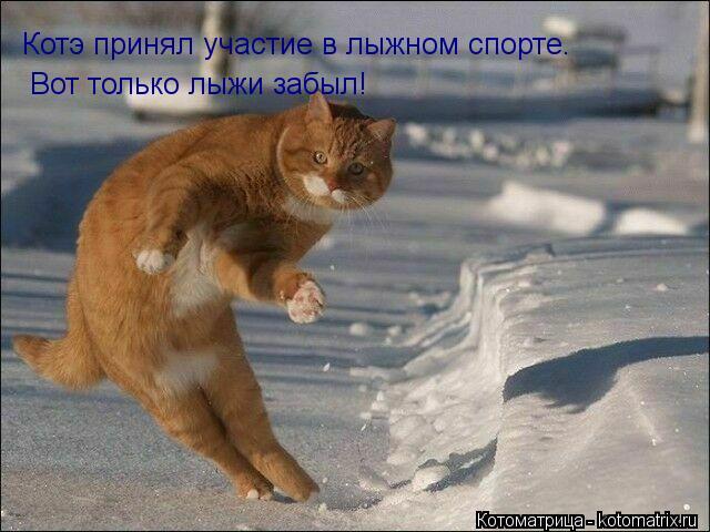 Котоматрица: Котэ принял участие в лыжном спорте. Вот только лыжи забыл!