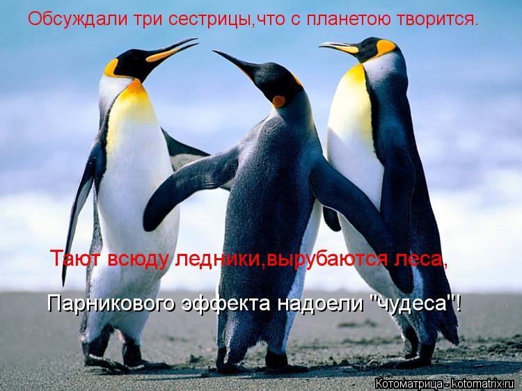 """Котоматрица: Обсуждали три сестрицы,что с планетою творится. Тают всюду ледники,вырубаются леса, Парникового эффекта надоели """"чудеса""""!"""