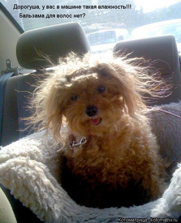 Котоматрица: Дорогуша, у вас в машине такая влажность!!! Бальзама для волос нет?