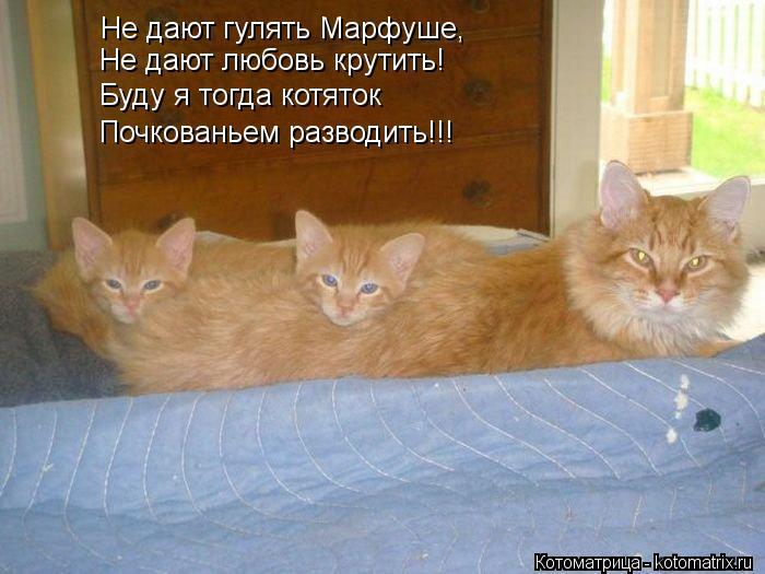 Котоматрица: Не дают гулять Марфуше, Не дают любовь крутить! Буду я тогда котяток Почкованьем разводить!!!