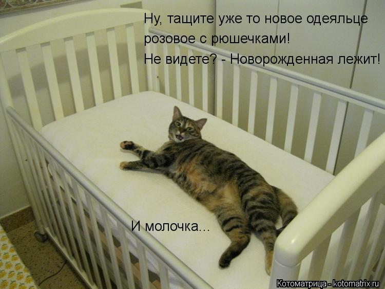 Котоматрица: Ну, тащите уже то новое одеяльце розовое с рюшечками! Не видете? - Новорожденная лежит! И молочка...