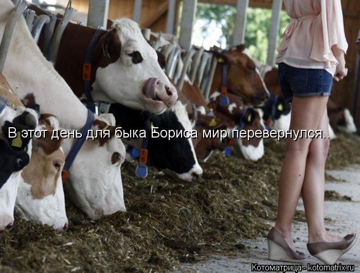 Котоматрица: В этот день для быка Бориса мир перевернулся..