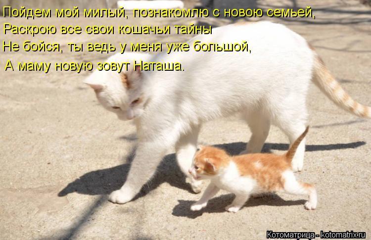 Котоматрица: Пойдем мой милый, познакомлю с новою семьей,  Раскрою все свои кошачьи тайны Не бойся, ты ведь у меня уже большой, А маму новую зовут Наташа.