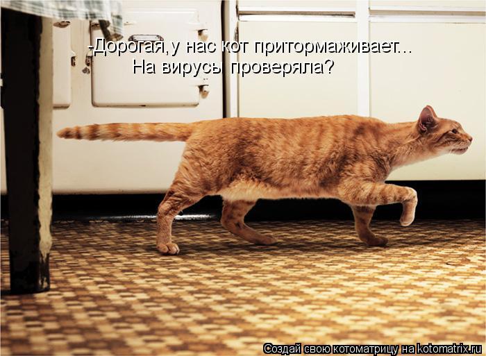 Котоматрица: -Дорогая,у нас кот притормаживает... На вирусы проверяла?