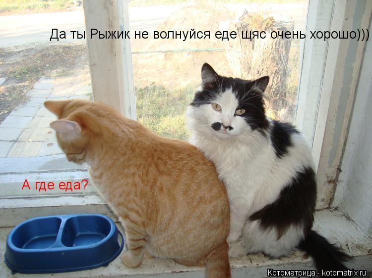 Котоматрица: А где еда? Да ты Рыжик не волнуйся еде щяс очень хорошо)))