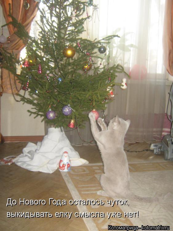 Котоматрица: До Нового Года осталось чуток,  выкидывать елку смысла уже нет!