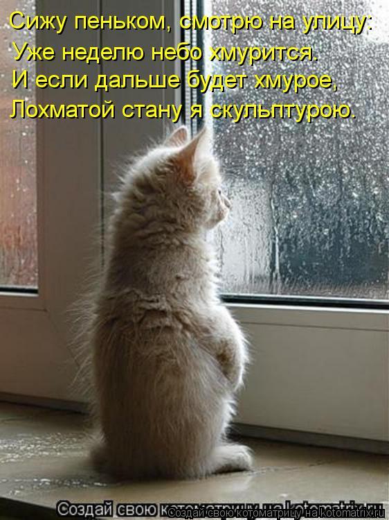 Котоматрица: Сижу пеньком, смотрю на улицу: Уже неделю небо хмурится. И если дальше будет хмурое, Лохматой стану я скульптурою.
