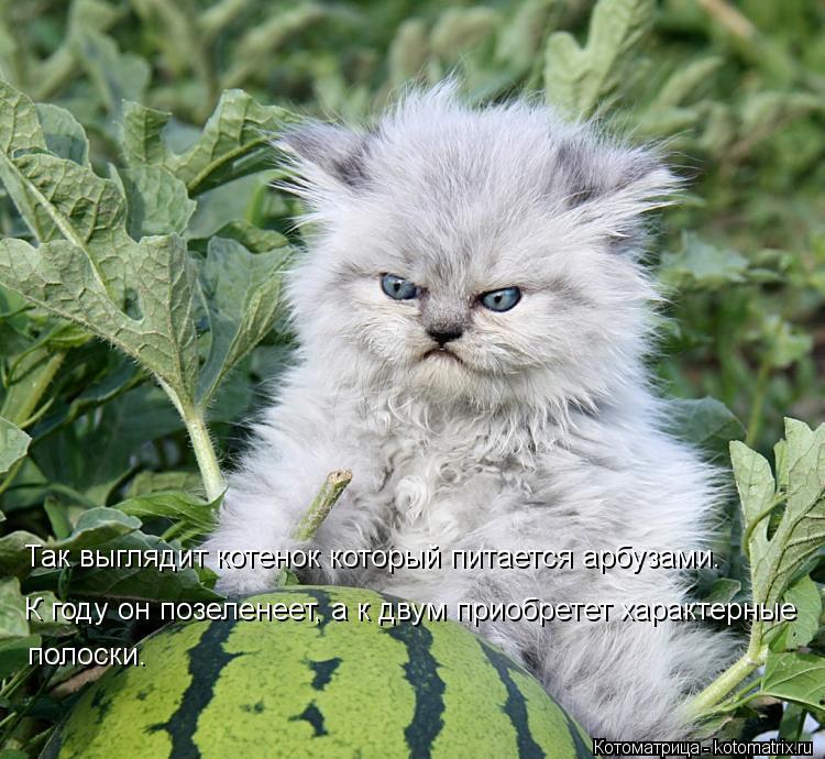 Котоматрица: Так выглядит котенок который питается арбузами. К году он позеленеет, а к двум приобретет характерные  полоски.