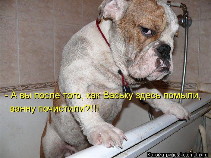 Котоматрица: - А вы после того, как Ваську здесь помыли, ванну почистили?!!!