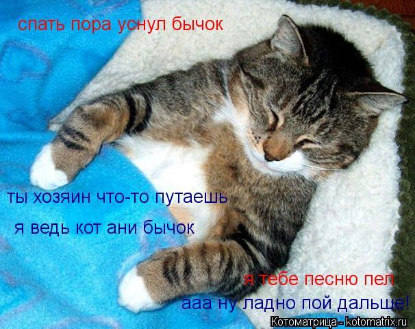спать пора смешные картинки