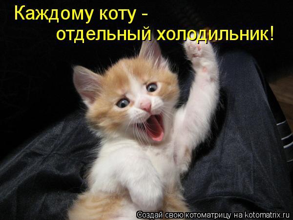 Котоматрица: Каждому коту - отдельный холодильник!