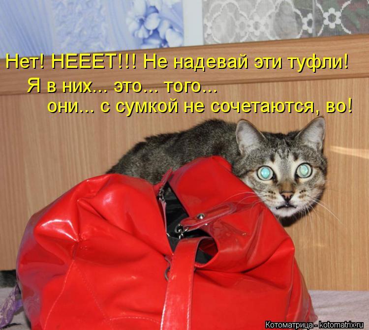 Котоматрица: они... с сумкой не сочетаются, во! Я в них... это... того...  Нет! НЕЕЕТ!!! Не надевай эти туфли!