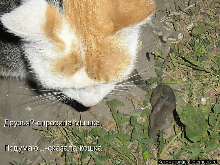 Котоматрица: Друзья?-спросила мышка. Подумаю...-сказала кошка