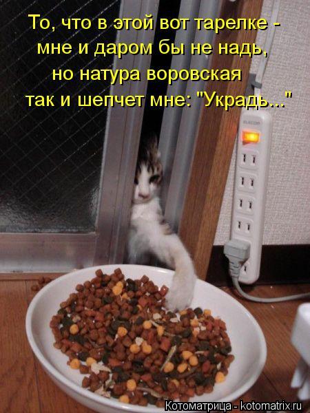 """Котоматрица: То, что в этой вот тарелке -  мне и даром бы не надь, но натура воровская так и шепчет мне: """"Украдь..."""""""