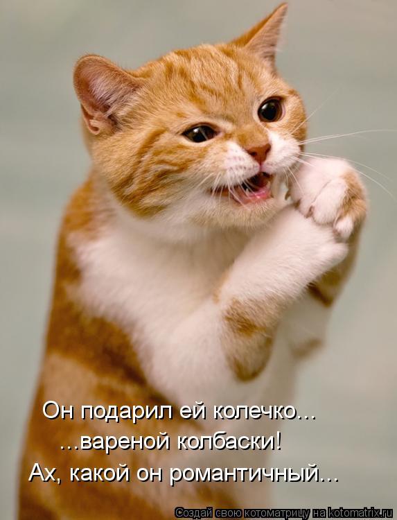 Котоматрица: Он подарил ей колечко... ...вареной колбаски!  Ах, какой он романтичный...