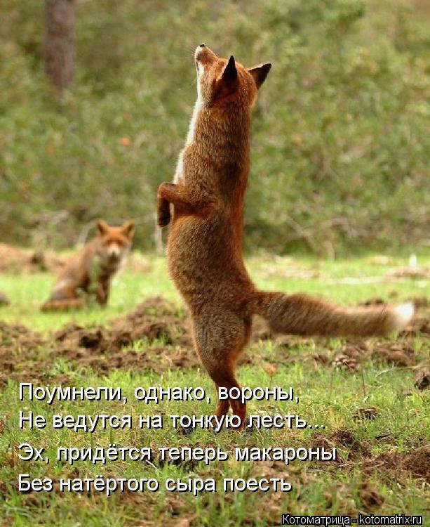 Котоматрица: Поумнели, однако, вороны, Не ведутся на тонкую лесть... Эх, придётся теперь макароны Без натёртого сыра поесть