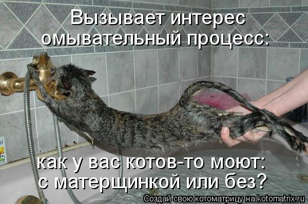 Котоматрица: Вызывает интерес омывательный процесс: как у вас котов-то моют: с матерщинкой или без?