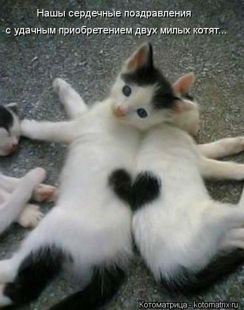 Котоматрица: Нашы сердечные поздравления с удачным приобретением двух милых котят...