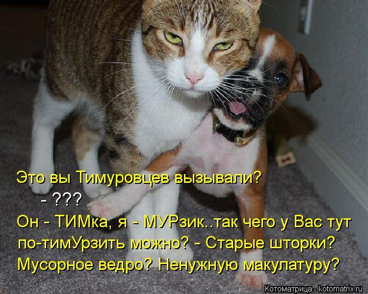 Котоматрица: Это вы Тимуровцев вызывали? - ??? Он - ТИМка, я - МУРзик..так чего у Вас тут по-тимУрзить можно? - Старые шторки?  Мусорное ведро? Ненужную макулат