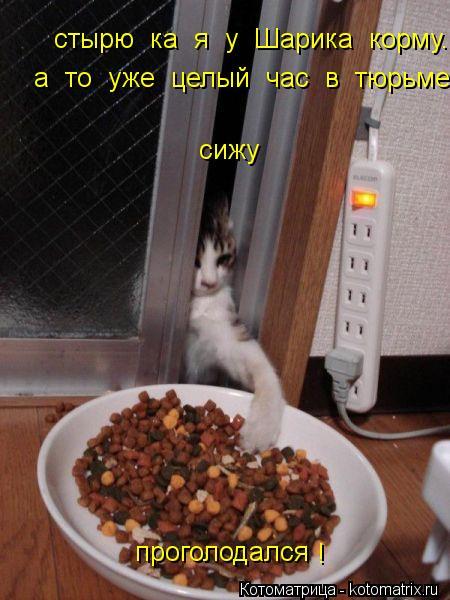 Котоматрица: стырю  ка  я  у  Шарика  корму. сижу проголодался а  то  уже  целый  час  в  тюрьме  сижу... !