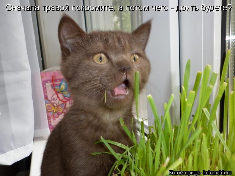 Котоматрица: Сначала травой покормите, а потом чего - доить будете?