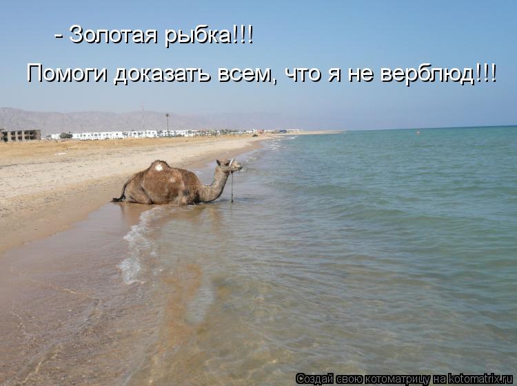 Котоматрица: - Золотая рыбка!!!  Помоги доказать всем, что я не верблюд!!!