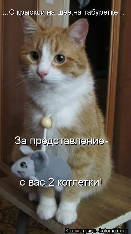 Котоматрица: ...С крыской на шее;на табуретке... За представление- с вас 2 котлетки!