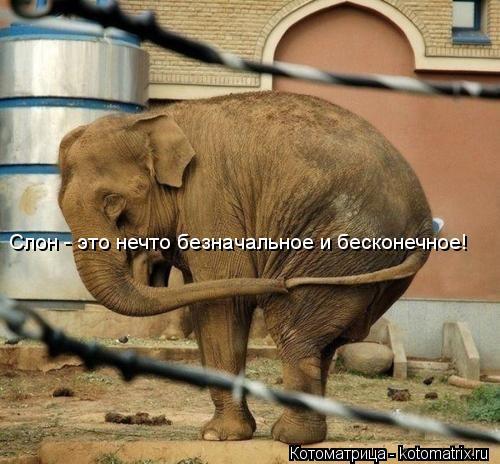 Котоматрица: Слон - это нечто безначальное и бесконечное!
