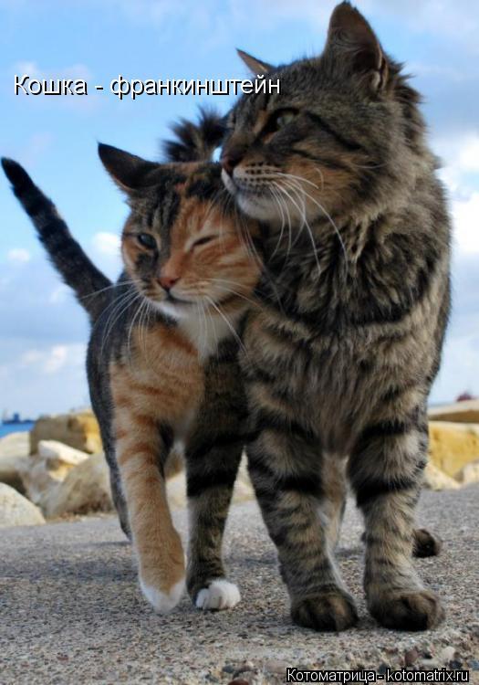 Котоматрица: Кошка - франкинштейн