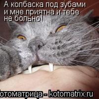 Котоматрица: А колбаска под зубами  и мне приятна и тебе  не больно!