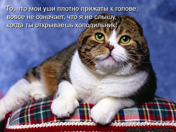 Котоматрица: То, что мои уши плотно прижаты к голове, вовсе не означает, что я не слышу, когда ты открываешь холодильник!