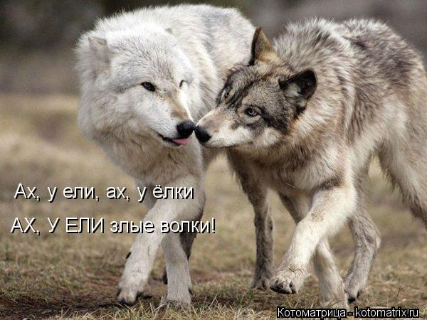 Котоматрица: Ах, у ели, ах, у ёлки АХ, У ЕЛИ злые волки!