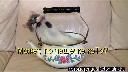 Котоматрица: Может, по чашечке коТэ?