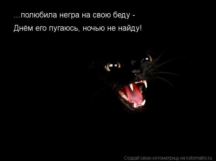 Котоматрица: ...полюбила негра на свою беду -  Днём его пугаюсь, ночью не найду!
