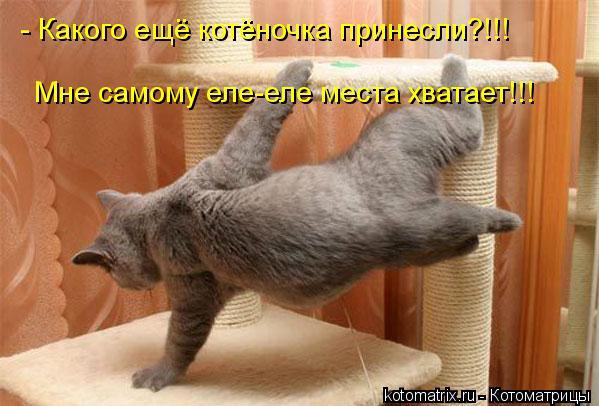 Котоматрица: - Какого ещё котёночка принесли?!!! Мне самому еле-еле места хватает!!!