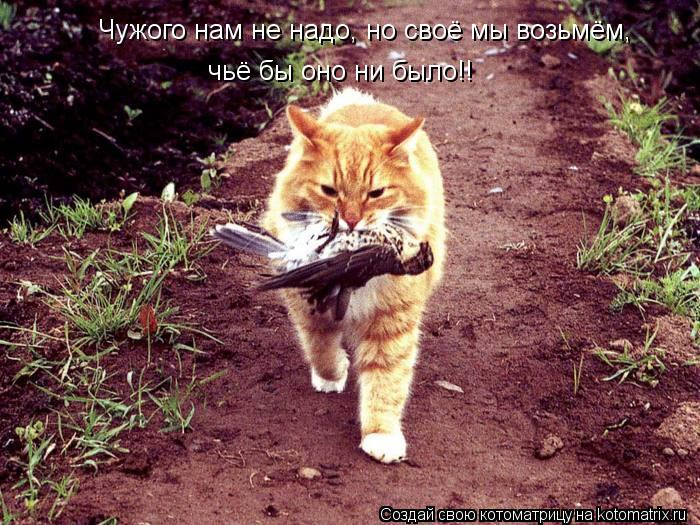 Котоматрица: Чужого нам не надо, но своё мы возьмём, чьё бы оно ни было!!