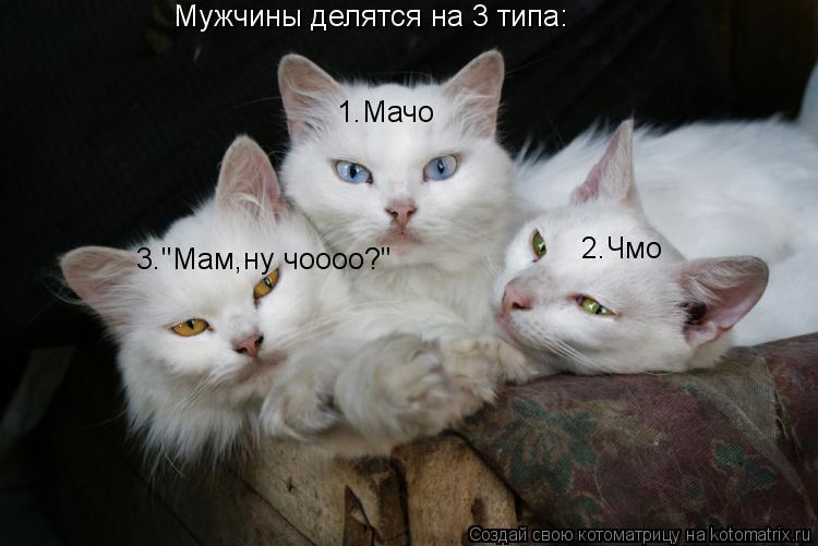 "Котоматрица: Мужчины делятся на 3 типа: 1.Мачо 2.Чмо 3.""Мам,ну чоооо?"""