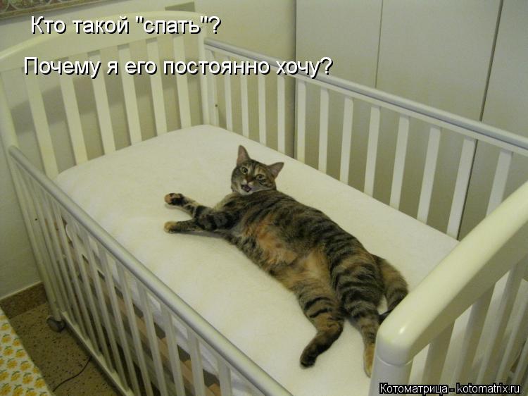 """Котоматрица: Кто такой """"спать""""? Почему я его постоянно хочу?"""