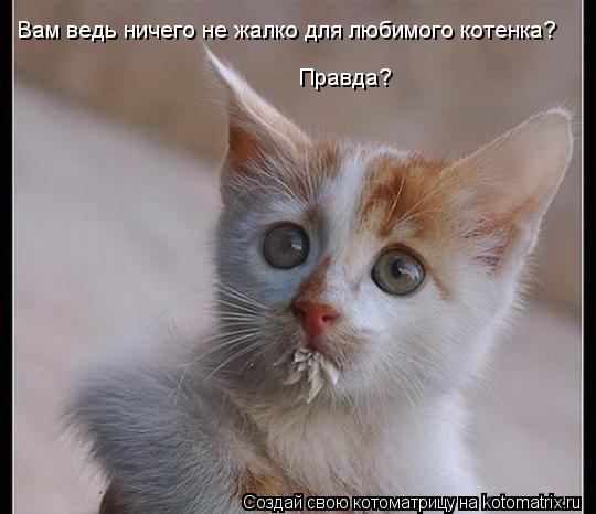 Котоматрица: Вам ведь ничего не жалко для любимого котенка? Правда?