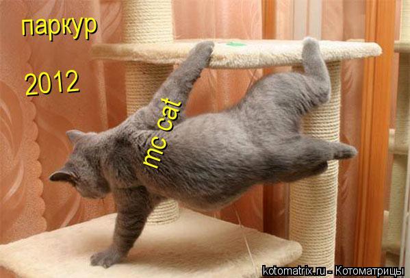 Котоматрица: паркур 2012 mc cat