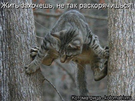 Котоматрица: Жить захочешь, не так раскорячишься!