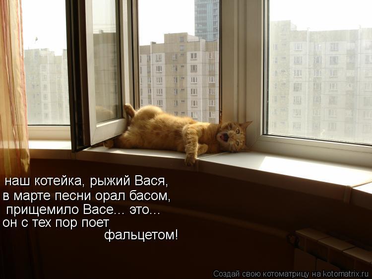 Котоматрица: наш котейка, рыжий Вася,  в марте песни орал басом, прищемило Васе... это... он с тех пор поет фальцетом!