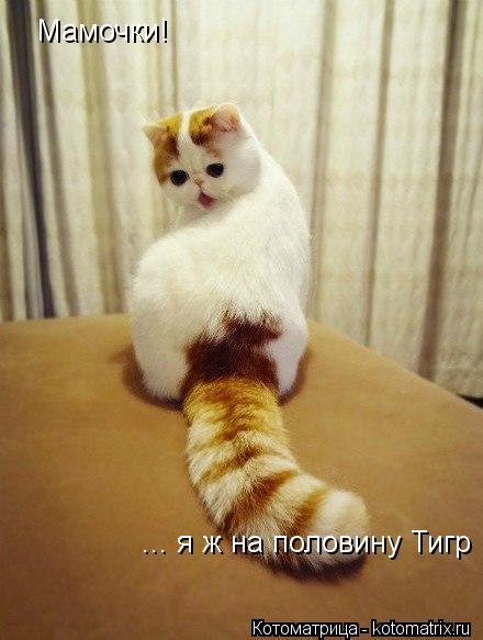 Котоматрица: Мамочки! ... я ж на половину Тигр