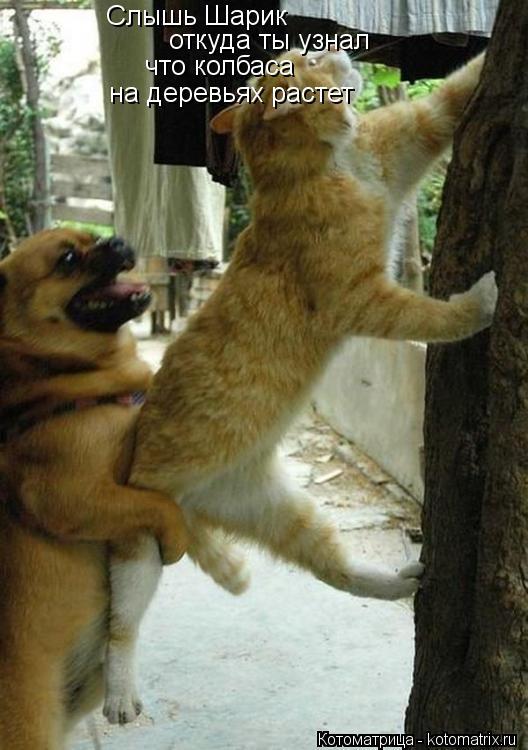 Котоматрица: Слышь Шарик  откуда ты узнал  что колбаса на деревьях растет