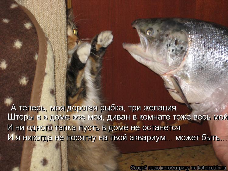 Котоматрица: А теперь, моя дорогая рыбка, три желания Шторы в в доме все мои, диван в комнате тоже весь мой И ни одного тапка пусть в доме не останется И я н