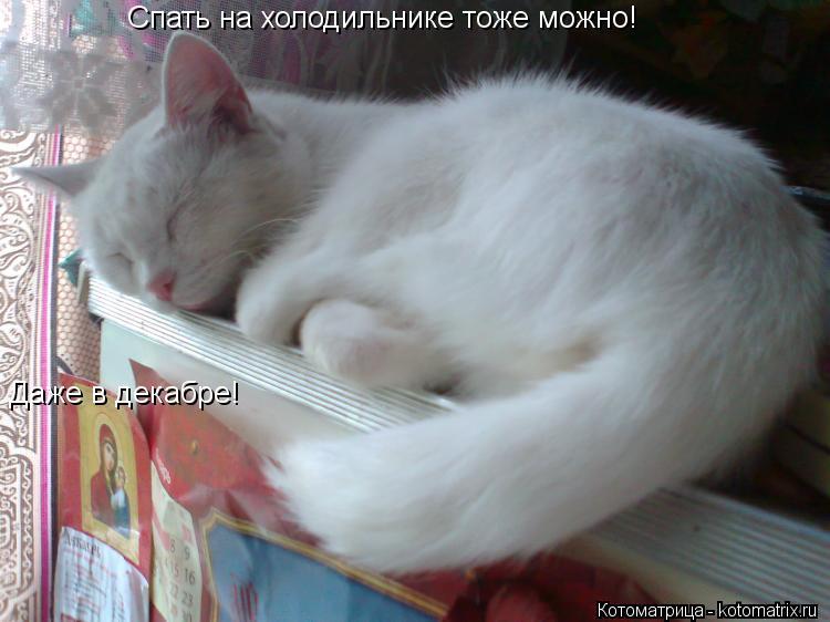 Котоматрица: Спать на холодильнике тоже можно! Даже в декабре!