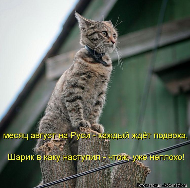 Котоматрица: месяц август на Руси - каждый ждёт подвоха, Шарик в каку наступил - чтож, уже неплохо!